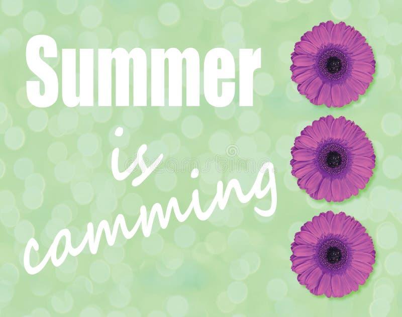 L'estate è fiore di camma e porpora del fiore della gerbera su fondo verde chiaro illustrazione di stock