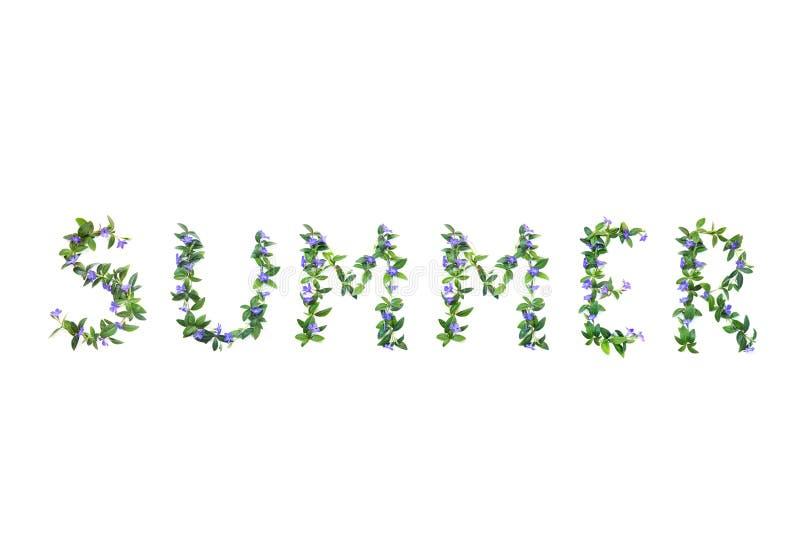 L'estate di parola è fatta dai fiori della vinca Fondo isolato bianco immagini stock