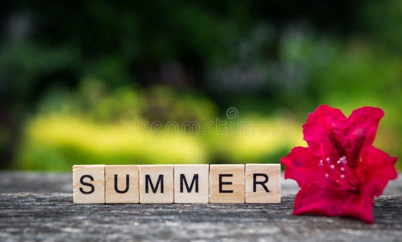 L'estate di parola, composta delle plance di legno leggere e rhodode rosso immagini stock libere da diritti