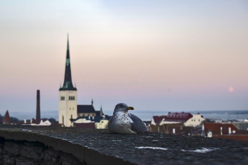L'Estonia Tallinn - 11 gennaio 2017 Panorama della città di Tallinn immagine stock libera da diritti