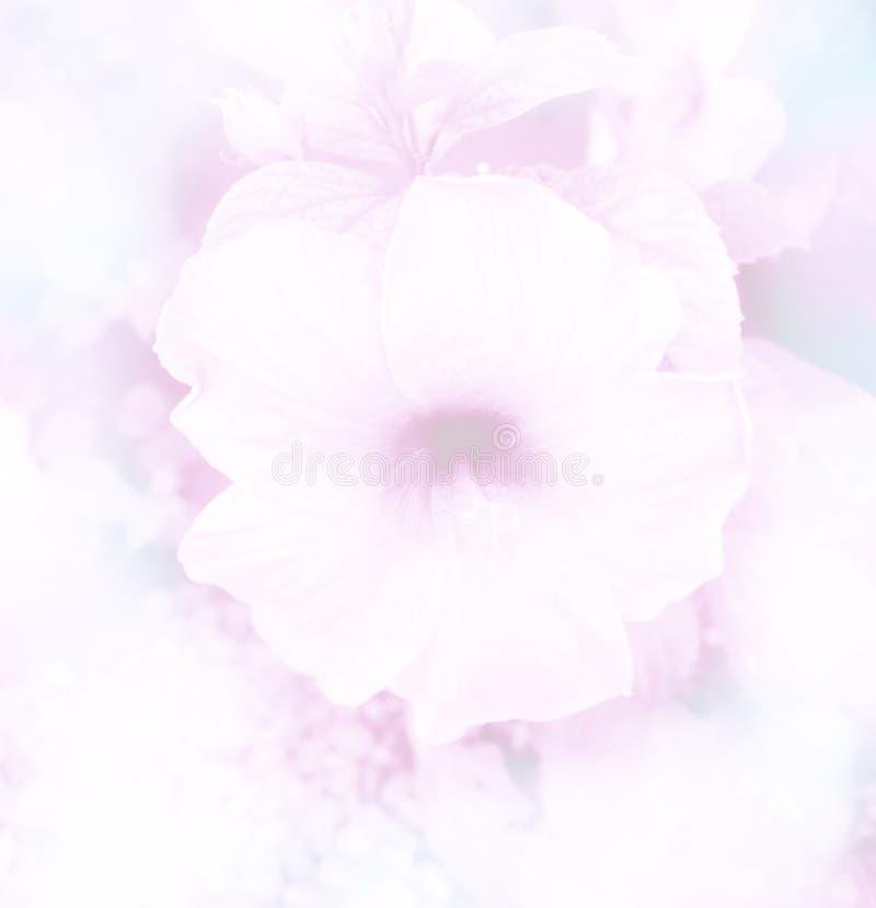 l'estratto ha offuscato il bello ibisco nel fondo molle del fiore di colore immagini stock libere da diritti