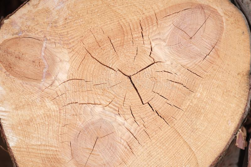 L'estremità del pino con le crepe e gli anelli annuali alcuni dove emerge la resina immagine stock libera da diritti