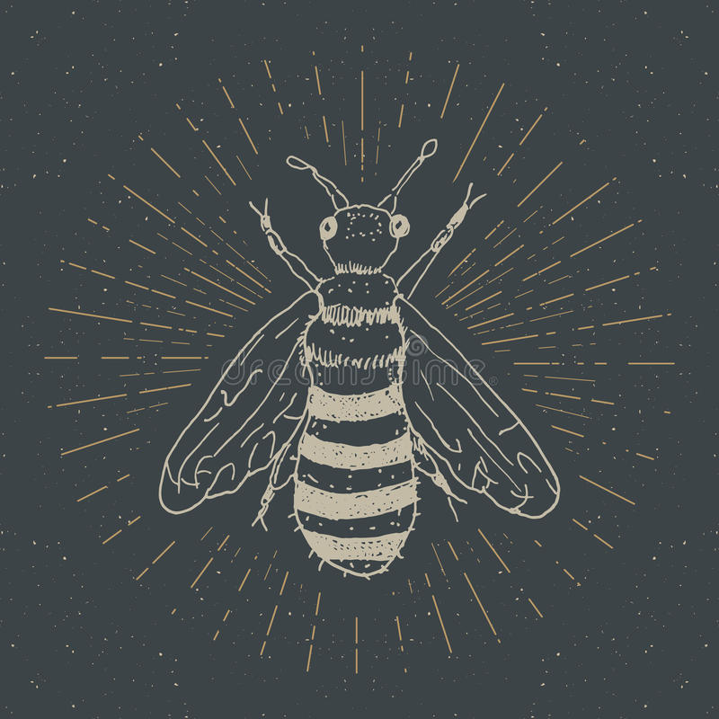 L'etichetta d'annata, l'ape disegnata a mano, lerciume ha strutturato il distintivo, il retro modello di logo, illustrazione di v illustrazione vettoriale