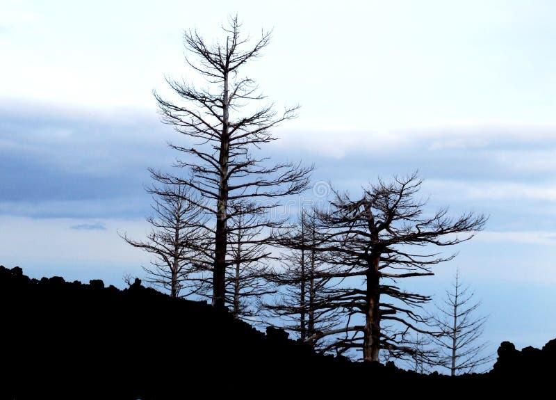 L'Etna-Vulcano-Sicilia-Italia - terreni comunali creativi da gnuckx immagini stock libere da diritti