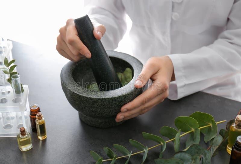 L'eucalyptus de broyage de pharmacologue part en mortier sur la table photographie stock libre de droits