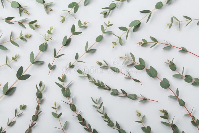 L'eucalyptus lascia a modello della natura la vista superiore stile piano di disposizione fotografia stock libera da diritti