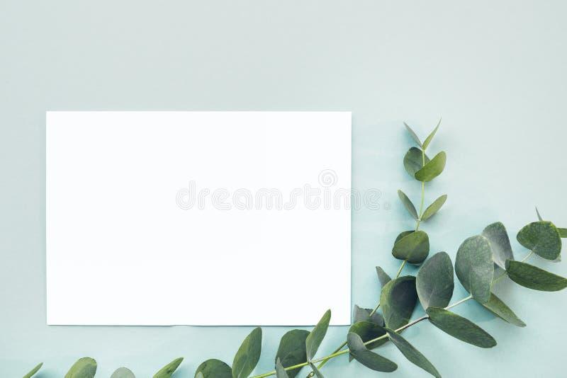 L'eucalyptus plat de configuration s'embranche et feuille blanche vide sur le fond bleu, vue supérieure Voir les mes autres trava image libre de droits