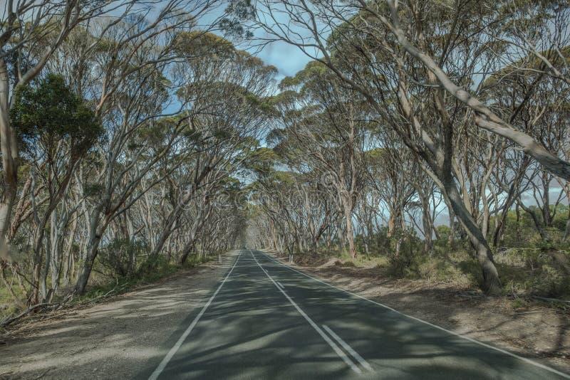 L'eucalyptus a rayé la route sur l'île de kangourou, Australie du sud images libres de droits