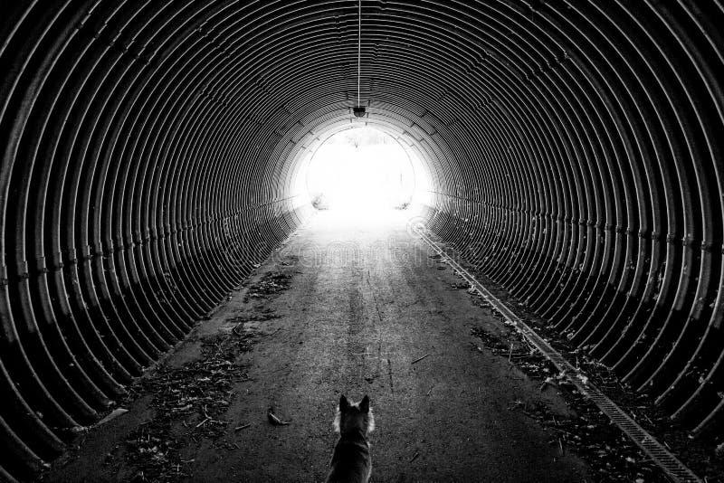 L'extrémité du tunnel photographie stock libre de droits