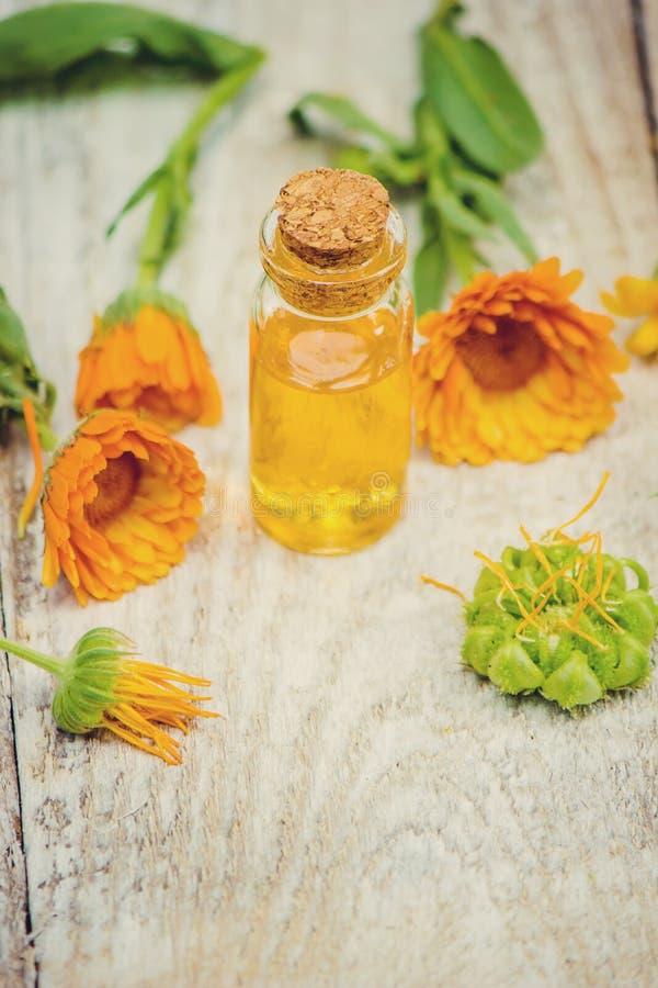 L'extrait de calendula Plantes médicinales image stock