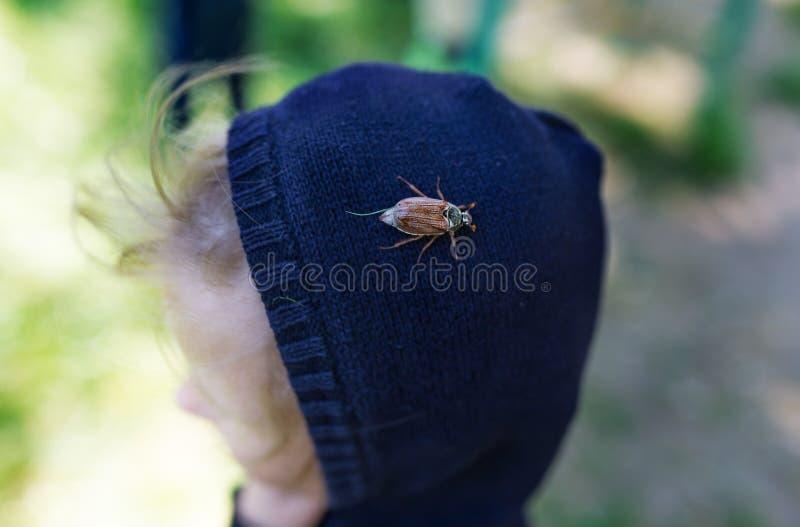 L'hanneton se repose sur le dessus de la tête photos stock