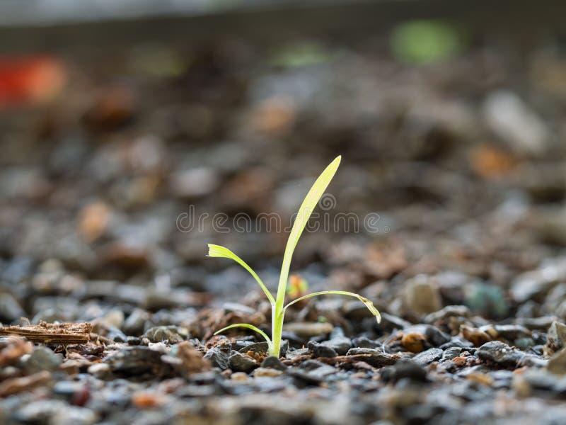 L'herbe à survivre dans l'aride images libres de droits