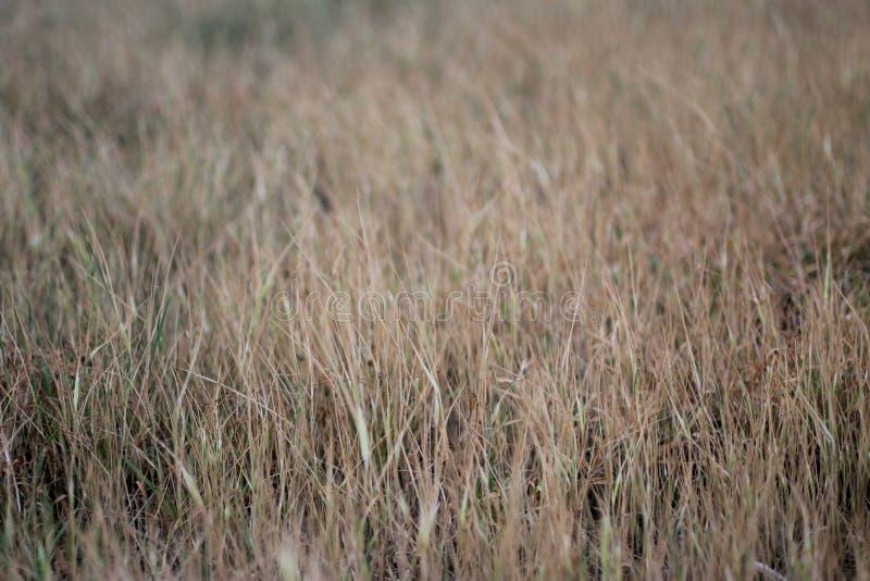 L'herbe de Brown part du fond de texture de modèle photo stock