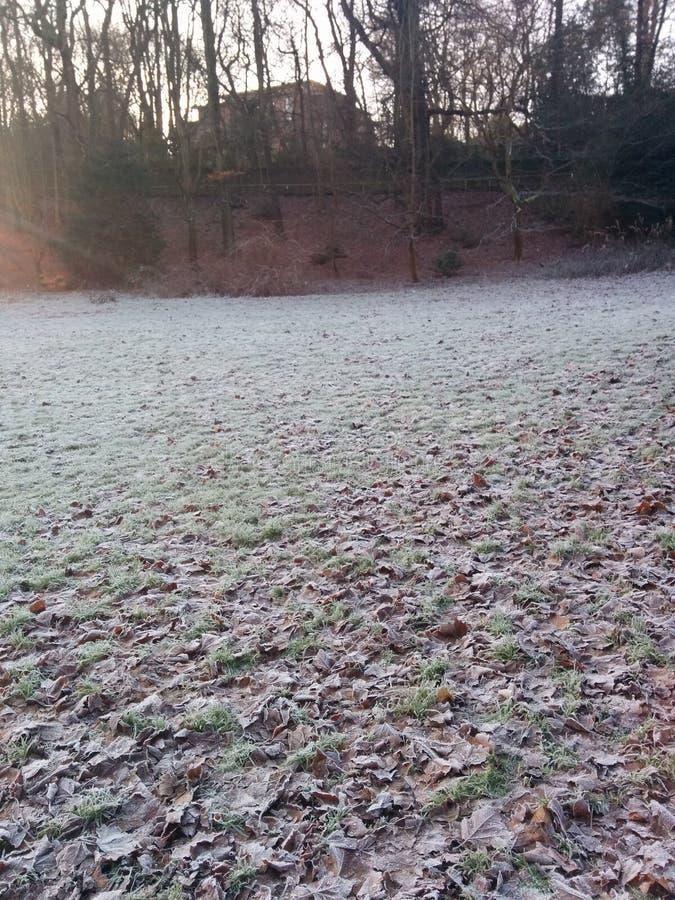 L'herbe de Frost congelée part de l'hiver image libre de droits