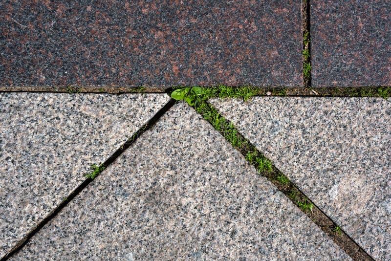 L'herbe est par les pavés d'en haut photos libres de droits