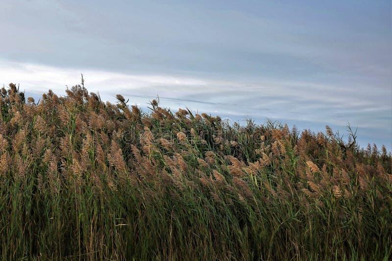 L'herbe et le ciel viennent ensemble images libres de droits
