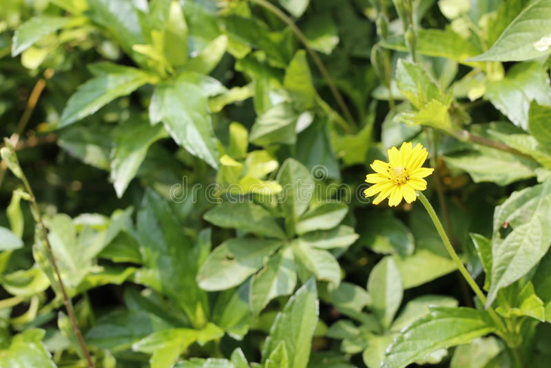 L'herbe jaune fleurit des images images stock