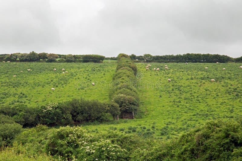 L'herbe n'est pas plus verte image libre de droits