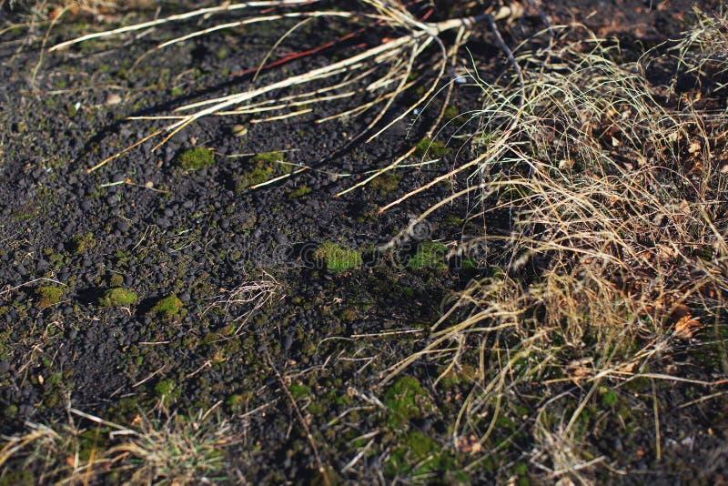 L'herbe ratatinée sur la terre photographie stock