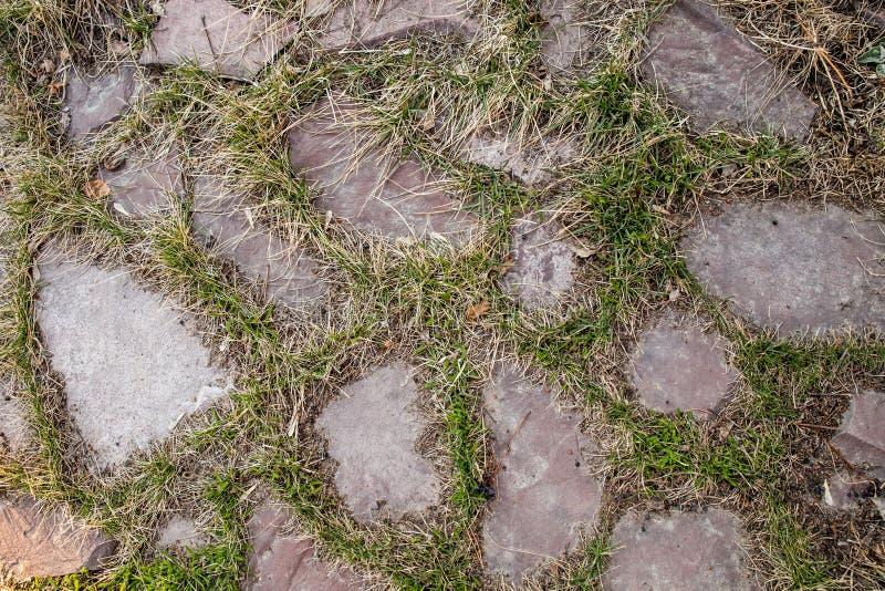L'herbe traverse les dalles en pierre naturelles photos libres de droits