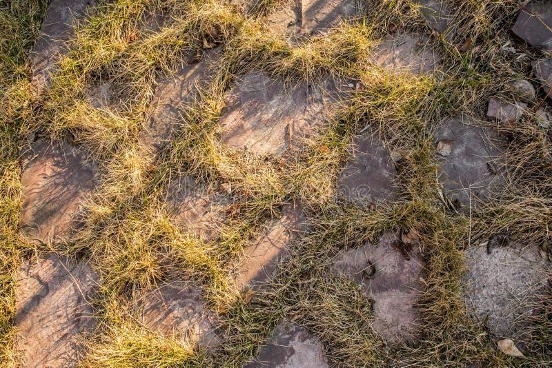 L'herbe traverse les dalles en pierre naturelles photo libre de droits