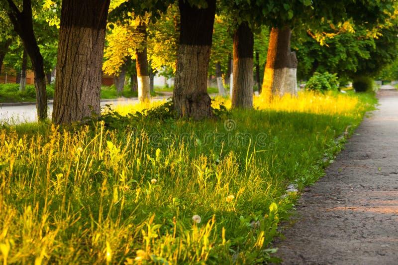L'herbe vert clair épaisse de jour d'été se développe en parc Des deux côtés élevez les grands arbres verts photographie stock