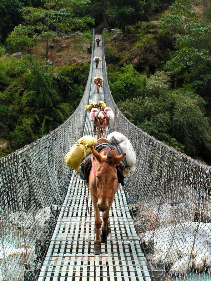 L'Himalaya - asini sul ponte fotografie stock