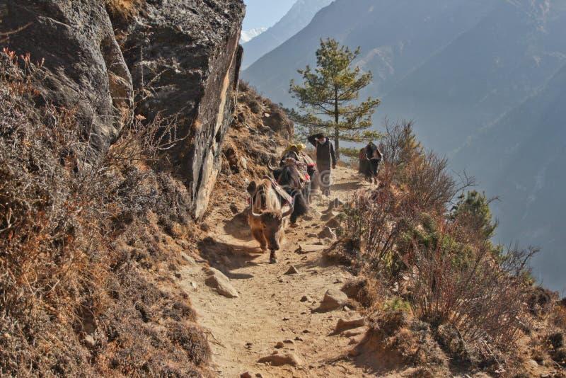 L'Himalaya, Népal cirka en mars 2012 : portiers et yaks de sherpa sur le chemin au camp de base d'Everest, beau temps ensoleillé  photo libre de droits