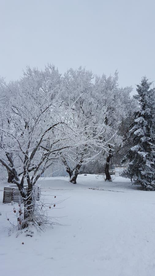 L'hiver au Canada photographie stock libre de droits
