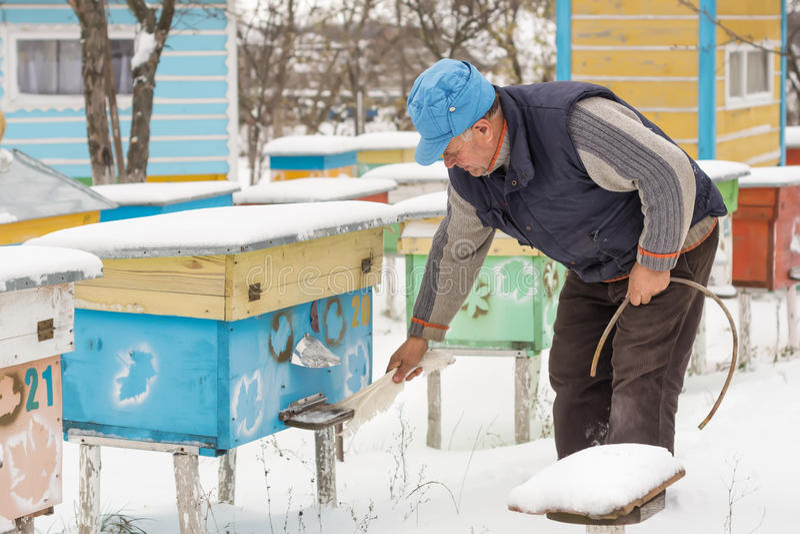 L'hiver d'apiculteur surveille le statut des abeilles dans la ruche photo libre de droits
