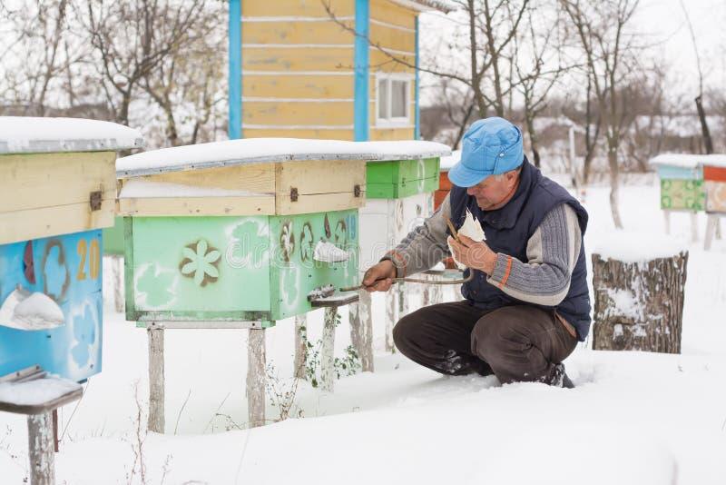 L'hiver d'apiculteur surveille le statut des abeilles dans la ruche images stock