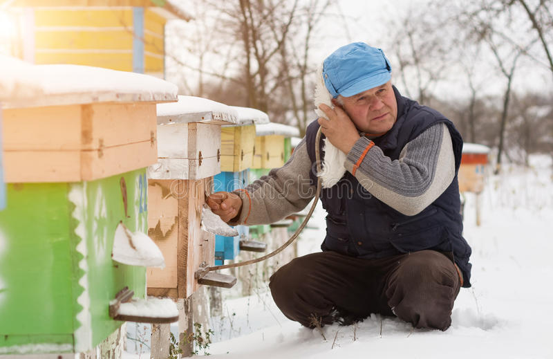 L'hiver d'apiculteur surveille le statut des abeilles dans la ruche image libre de droits