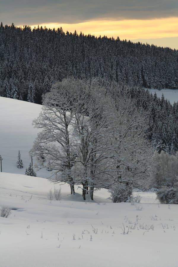 l'hiver d'arbre photographie stock libre de droits