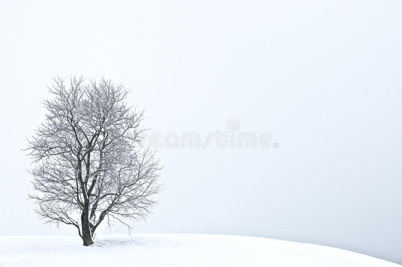 l'hiver d'arbre photo stock
