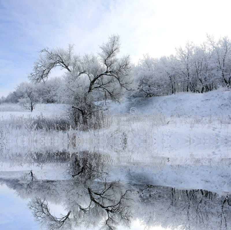 l'hiver d'arbre d'horizontal image libre de droits