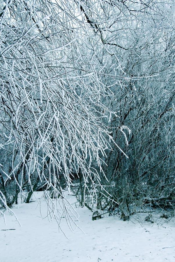 l'hiver d'arbres de fond image libre de droits