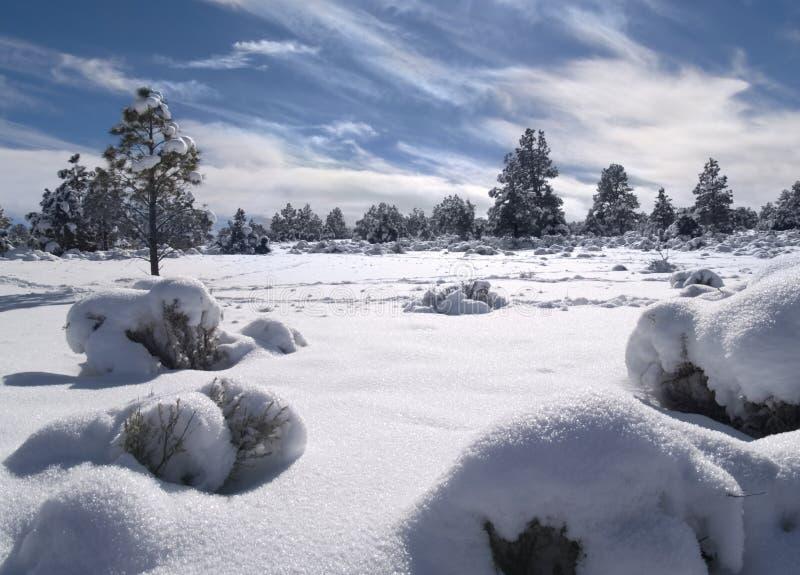 L'hiver dans la forêt photographie stock libre de droits