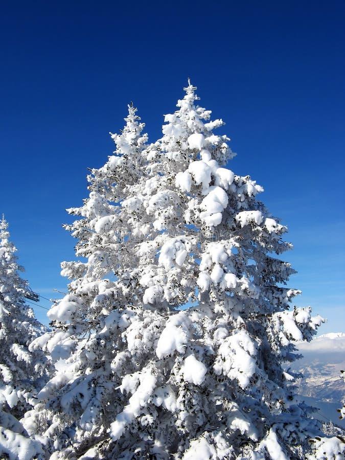 L'hiver dans les alpes photo libre de droits