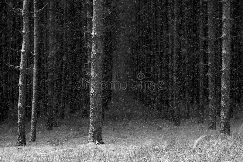 L'hiver dans les bois images libres de droits