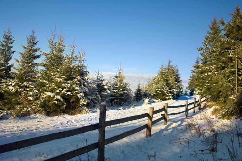 l'hiver de chemin forestier image stock