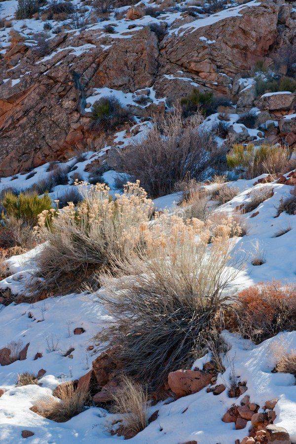 l'hiver de désert de l'Arizona photographie stock