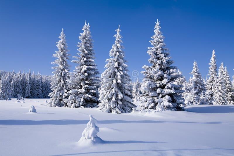 Download L'hiver de forêt image stock. Image du neige, cloudless - 8669419