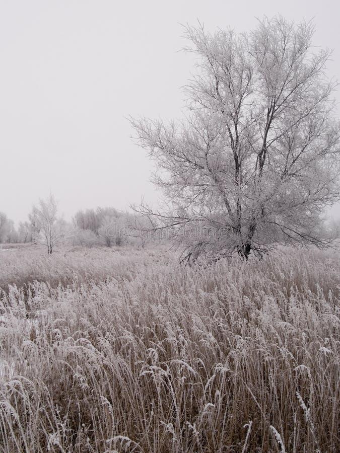 L'hiver de prairie du Dakota image libre de droits