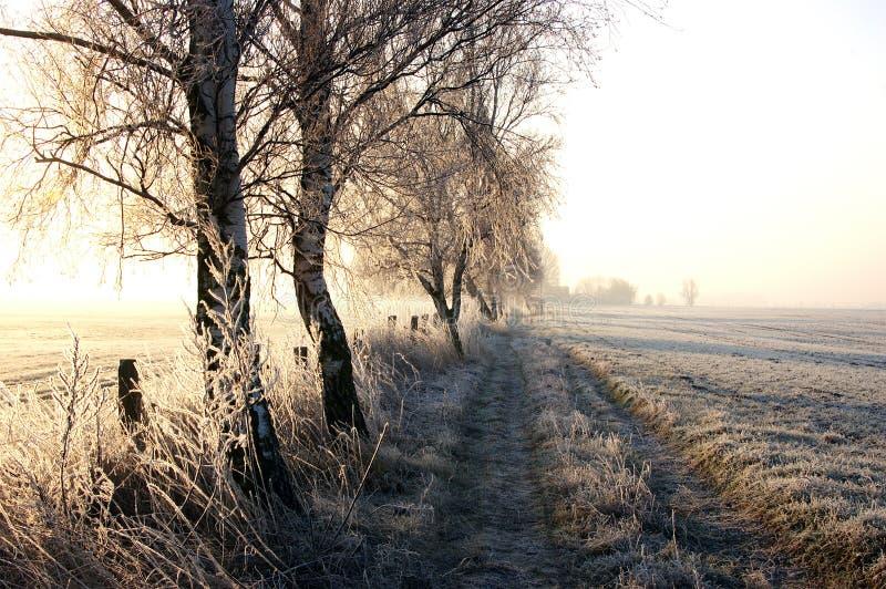 l'hiver de promenade photographie stock libre de droits