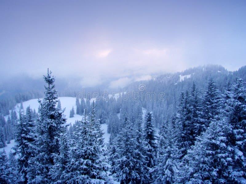 l'hiver de sapins photo libre de droits
