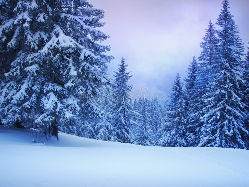 l'hiver de sapins images libres de droits