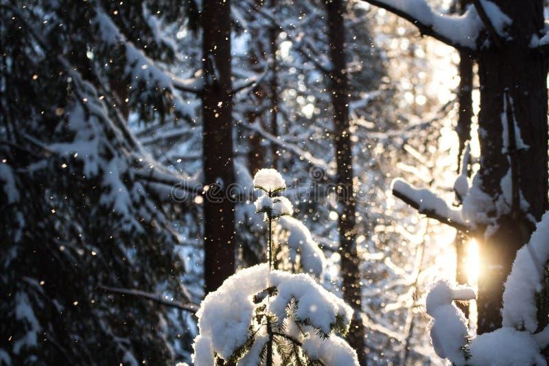 l'hiver de vue de l'Ukraine du soleil de montagne de moloda photos stock