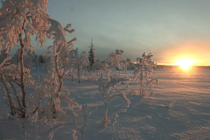l'hiver de vue de l'Ukraine du soleil de montagne de moloda photo libre de droits