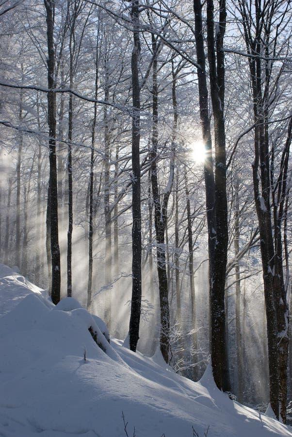 L'hiver en montagnes photo stock