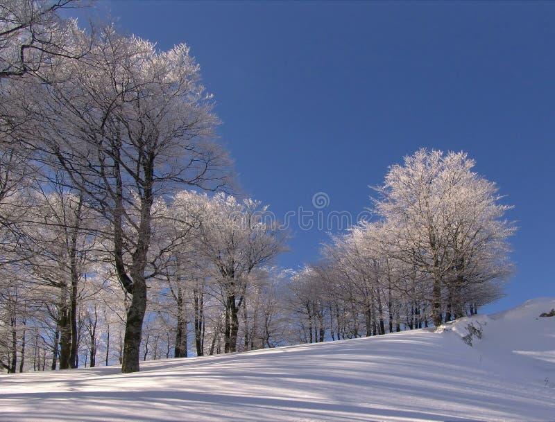 L'hiver en montagnes de Ciucas photo libre de droits